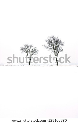 winter scene with trees and white landscape