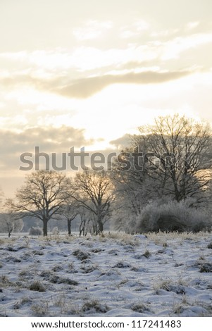 winter scene with trees in the morning