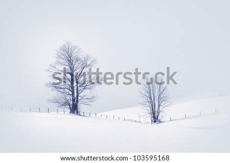 Winter scene with two snowy trees, toned image. - stock photo