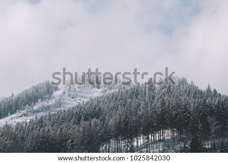 Winter scenery. Landscape.