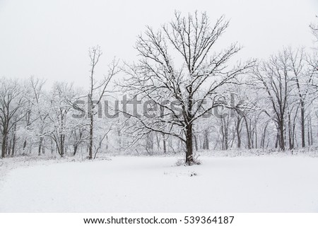 Winter scenery of a Chicago suburbs park