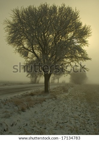 winter scenery with a tree by road covered with hoarfrost