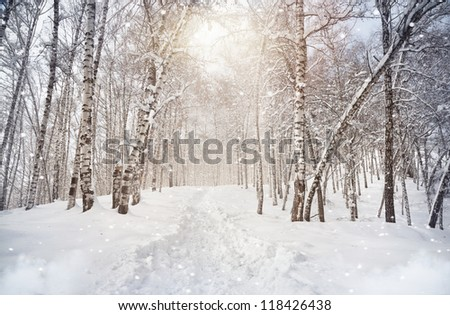 Winter scenic of Birchwood in mountains with snowfall in Kazakhstan - stock photo