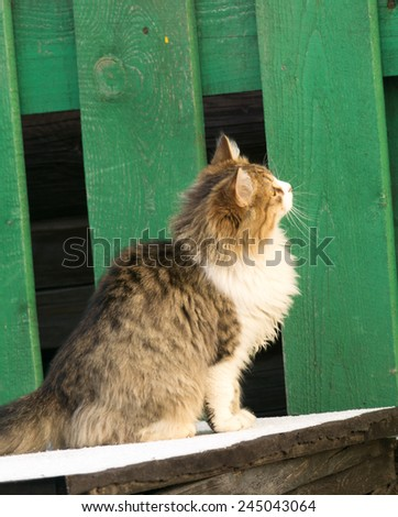 Winter shot of a curious cat hunting on birds. - stock photo