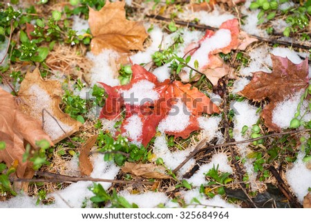 winter snow and autumn leaves - stock photo