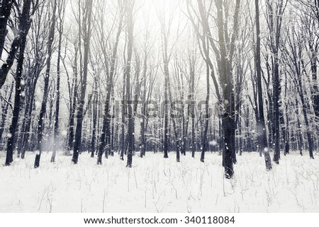 Winter snow covered forest. Beauty nature background - stock photo