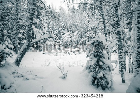 Winter snow covered trees. Viitna, Estonia. Toning