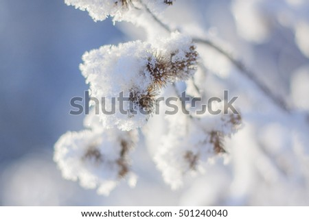 winter snow forest trees