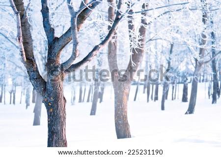 Winter snow landscape - stock photo