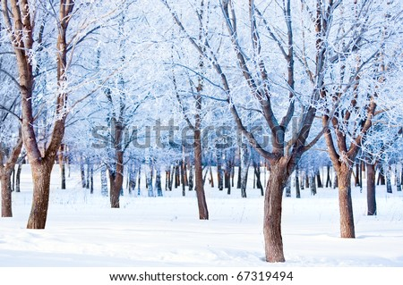 Winter snow landscape - stock photo
