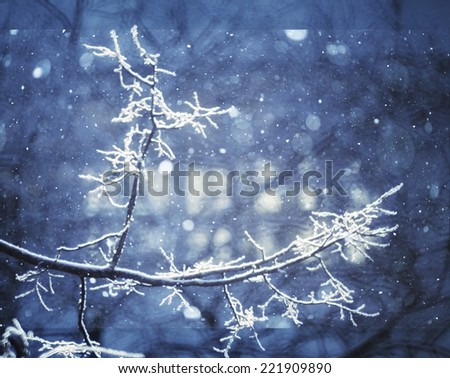 winter, snow on the branches of a tree, patterns - stock photo