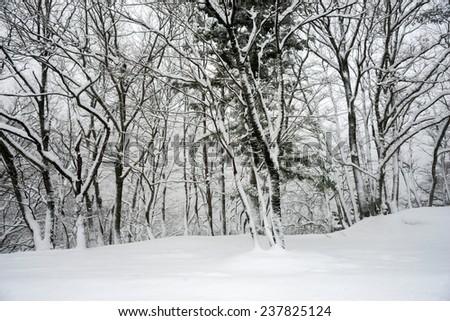 Winter snowfall in Shirakawa, Japan - stock photo