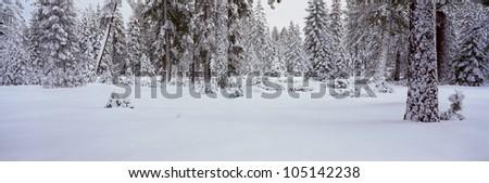 Winter Snowstorm in the Lake Tahoe Area, California - stock photo