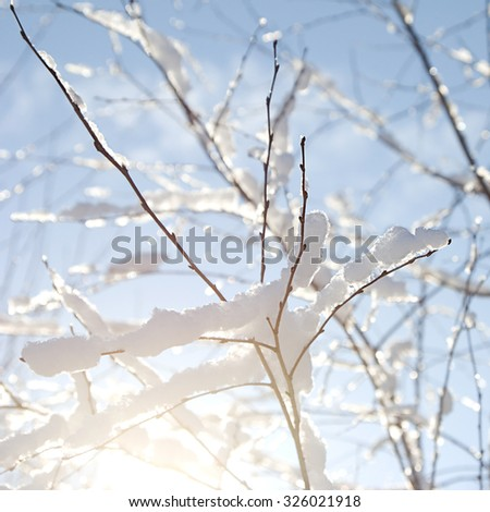winter snowy branches - stock photo
