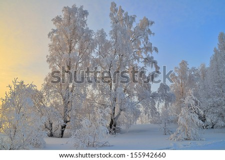 Winter snowy forest at sunset. A fairy Christmas tale.  - stock photo