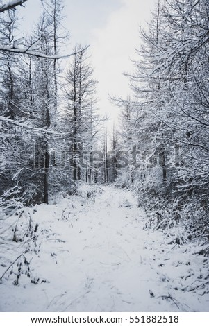 Winter snowy forest in east Iceland