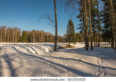 Winter snowy forest in the vicinity of St. Petersburg
