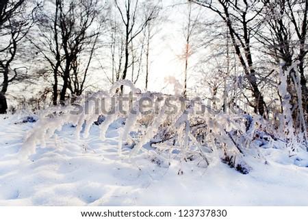 Winter snowy shoot. - stock photo