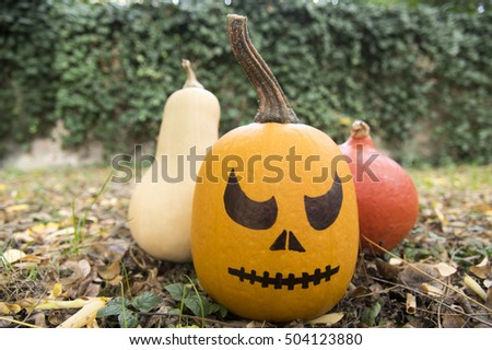 Winter squash, creeping plant, round, oblate, oval shape cucurbita pepo styriaca, used for Styrian pumpkin seed oil, ready for halloween with scary painted face