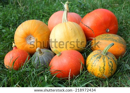 Winter squashes and pumpkins harvest in the garden - stock photo