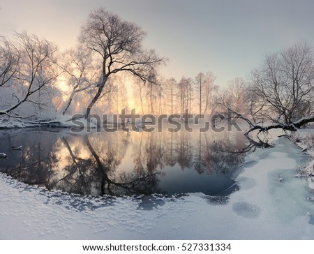 Winter sun illuminate frosty trees in the morning. Christmas morning landscape. Bright xmas backdrop.