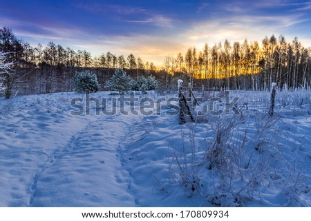 Winter sunrise in the forest - stock photo