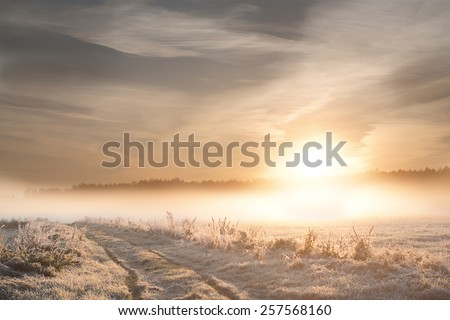 Winter sunrise landscape. Frozen plants and sun shining through mist - stock photo