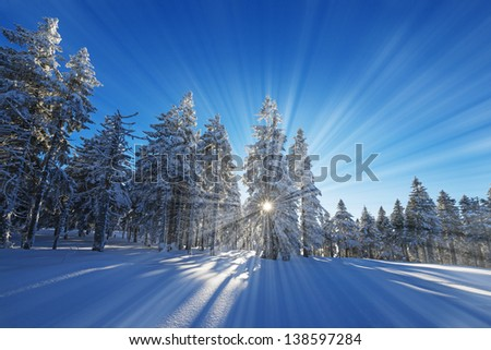 winter sunset and snow covered forest - stock photo