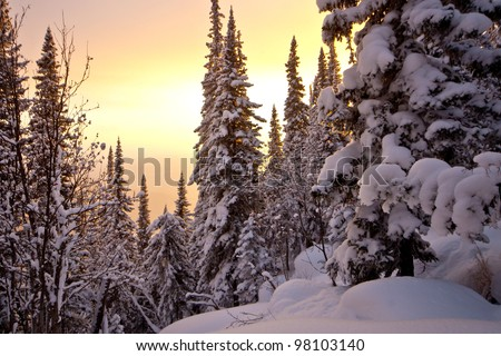 Winter sunset in the forest - stock photo