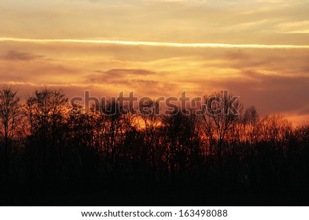 winter sunset on a forest - stock photo