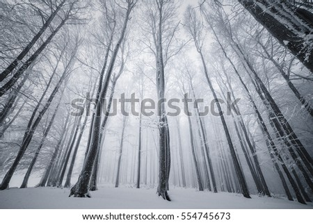 Winter Tale.Foggy Winter Landscape