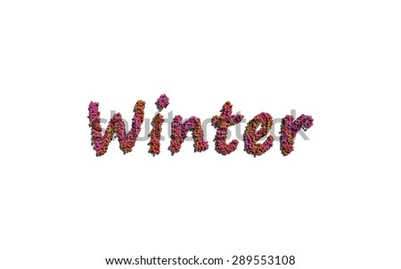 winter text flower with white background concept of typography - stock photo