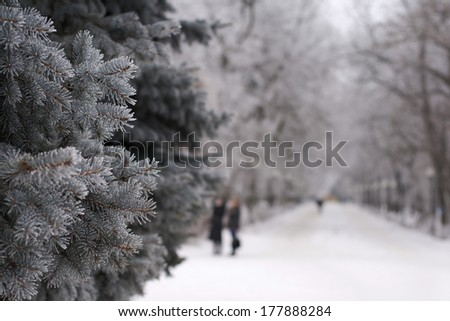 winter time in a park on a frosty day, some branches of fir in focus - stock photo