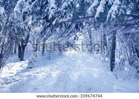 winter tree background - stock photo