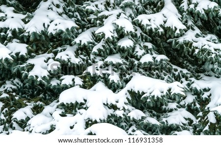 Winter tree covered with snow - stock photo