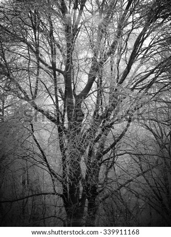 Winter tree in black and white