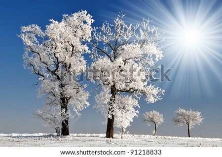 winter tree in Czech Republic - stock photo