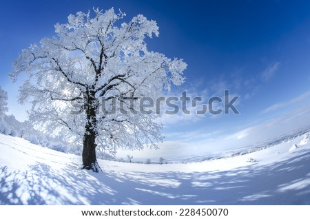 Winter tree in swith snow on a sunny day with blue sky - stock photo