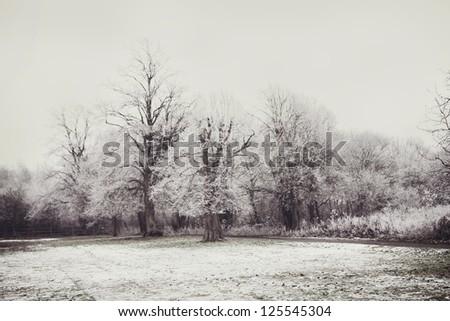 Winter Tree Landscape - stock photo