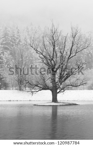 Winter tree on a small island with snow-covered mountains behind near Big Indian, New York (B&W) - stock photo