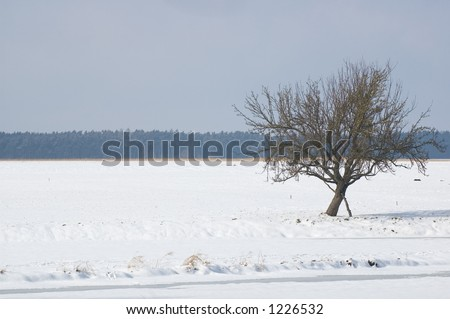winter tree on snow field