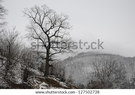 Winter tree silhouettes over light gray background - stock photo