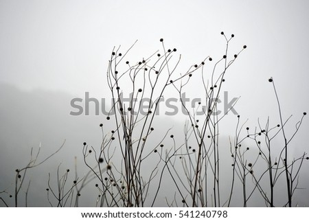 winter tree with no leaves in the fog