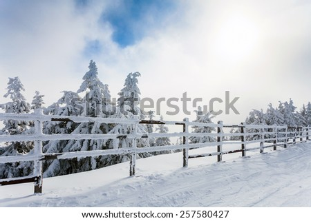 Winter trees and wooden fence covered in snow that borders a mountain road on winter season in Poiana Brasov, Romania