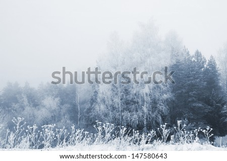 stock-photo-winter-trees-background-1475
