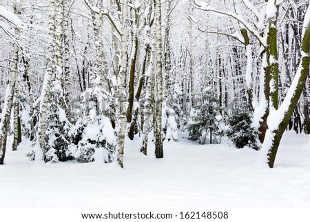 Winter trees covered with snow in the forest .