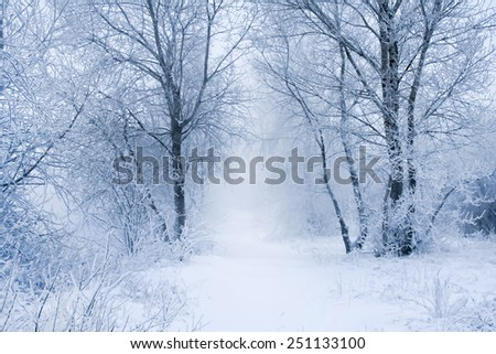 Winter trees in frost and fog - stock photo