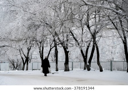 winter trees in hoarfrost and the going elderly woman