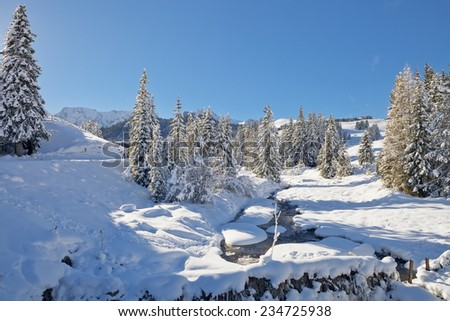 Winter trees in mountains covered with fresh snow, South Tyrol, Italy