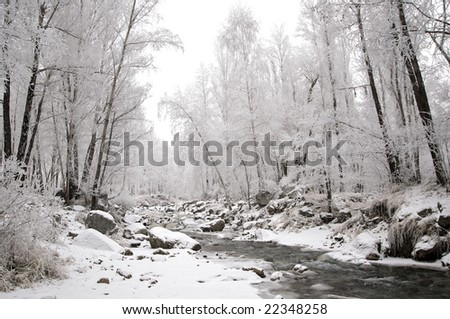 Winter trees in mountains, in the evening